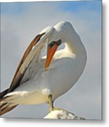 Masked Booby Metal Print