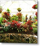 Massed Bromeliad In Hothouse Metal Print