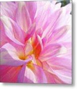 Master Gardeners Pink Dahlias Art Prints Baslee Troutman Metal Print