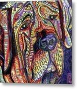 Mastiff Metal Print by Robert Wolverton Jr