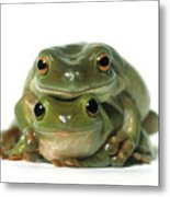 Mating Frogs Metal Print