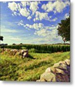 Matunuck Corn Fields Metal Print