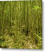 Maui's Thick Bamboo Metal Print