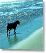 Maxwell On The Beach Metal Print