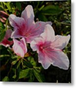 Maymont Flowers Metal Print
