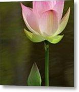 Pink Lotus And A Bud Metal Print