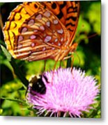Meadow Fritillary On Thistle Blossom Metal Print