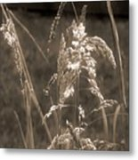 Meadow Grass In Sepia Metal Print