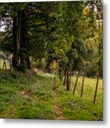 Meadow Grass Path Metal Print
