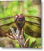 Meadow Hawk Dragonfly 2 Metal Print