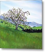 Meadow In Early March Metal Print