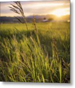 Meadow Light Metal Print