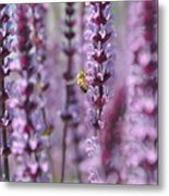Meadow Sage Metal Print
