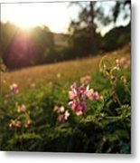 Meadow Sunset Metal Print