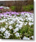 Meadow With Flowers At Botanic Garden In The Blue Mountains Metal Print