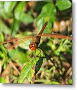 Meadowhawk Dragonfly Metal Print
