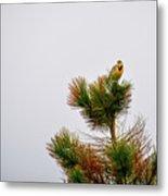Meadowlark - 1 Metal Print