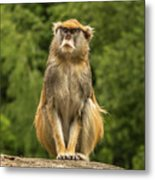 Meditating Monkey Metal Print