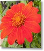 Medium Orange Daliha Metal Print