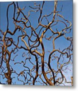 Medusa Limbs Reaching For The Sky Metal Print