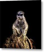 Meerkat Lookout Metal Print