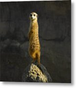 Meerkat On The Watch Metal Print