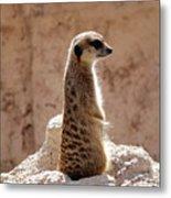 Meerkat Standing On Rock And Watching Metal Print