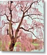 Meet Me Under The Pink Blooms Beside The Pond - Holmdel Park Metal Print