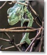 Mellers Chameleon Portrait 3 Metal Print