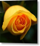 Mellow Yellow Metal Print