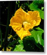 Melon's Flower 12 Metal Print
