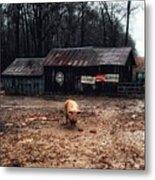 Messy Pig Farm Lot Metal Print