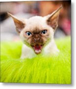 Mew Kitty Funny Mad Face Metal Print
