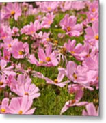 Mexican Aster Flowers 1 Metal Print