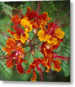 Mexican Bird Of Paradise Metal Print
