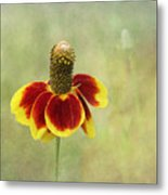 Mexican Hat IIi Metal Print