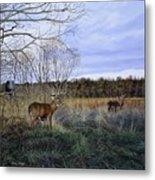Take Out - Deer Metal Print