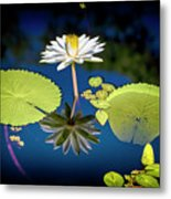 Mid Day Water Lily Reflection Metal Print