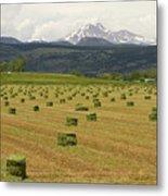 Mid June Colorado Hay  And The Twin Peaks Longs And Meeker Metal Print