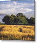 Mid Summer Cereal Field Metal Print