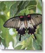 Midland Moth Metal Print