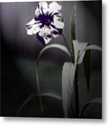 Midnight Bloom Metal Print