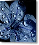 Midnight Dew Metal Print