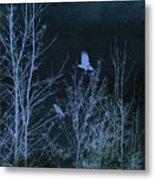 Midnight Flight Silhouette Blue Metal Print