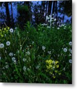 Midsummer Night's Magic Metal Print