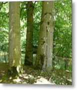 Mighty Beech Trees Metal Print