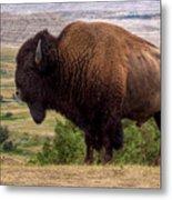 Mighty Bison Metal Print