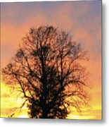 Mighty Oak At Sunset Metal Print