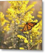 Migrating Monarch Butterfly Moses Cone Memorial Park North Carolina Metal Print