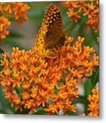 Milkweed And A Frittalary Metal Print